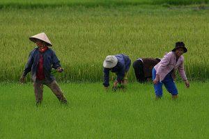 mission humanitaire et volontariat humanitaire au vietnam ses